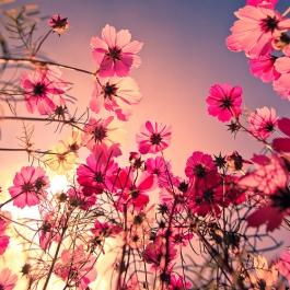 FLOWER-flowers-0