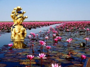 Gulenay Pema Lotus