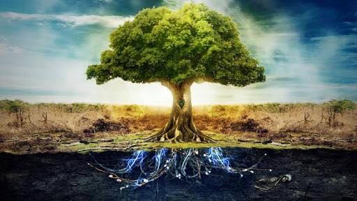 gulenay pema